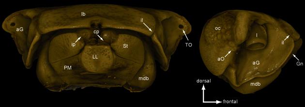CT Scan Zoospaerium bemanevika