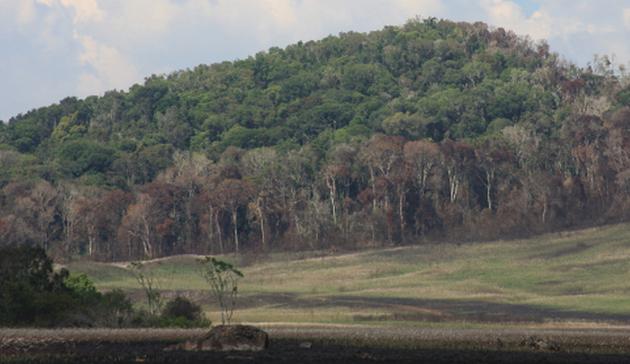Das Habitat der zwei neuen Arten. Kleine Regenwaldfragmente in Bemanevika. Die sterbenden Bäume am Waldrand sind gut sichtbar