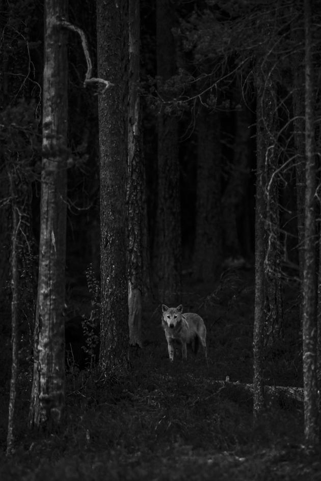 """Bild """"Scheue Begegnung"""" des """"Glanzlichter-Nachwuchs-Naturfotograf 2018"""" Lasse Kurkela aus Finnland"""