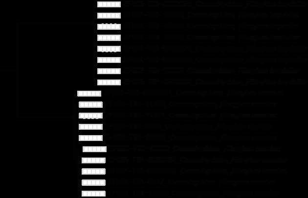 """Abb. 2: Ausschnitt aus dem TaxCI-Käferbaum: zwei """"saubere"""" DNA-Barcode-Cluster jeweils einer Art sind abgebildet."""