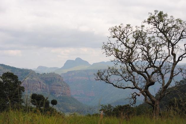Mosaik von Grasland auf den Ebenen (Hintergrund) und Wald im Tal, typisch für die Vegetation im südafrikanischen Escarpment.