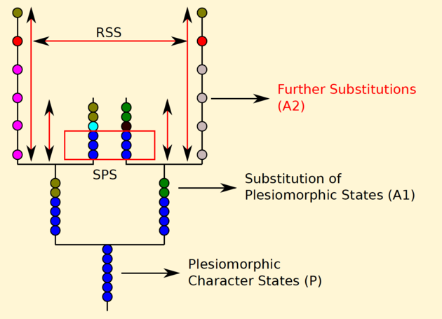 Accumulation Plesiomorphic Characters LBA
