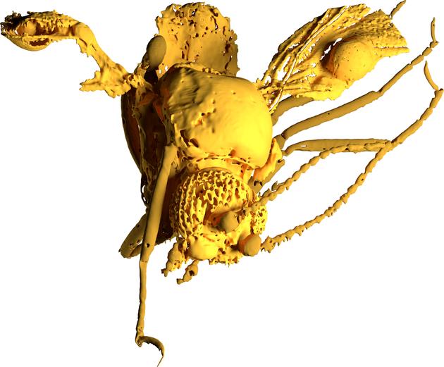 Modell der 54 Millionen Jahre alten Gnitze: Die blasenartige Struktur ist am vorderen Rand des rechten Flügels gut zu erkennen.