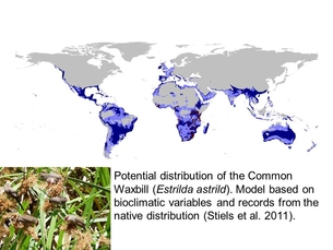 Distribution map of the Common Waxbill