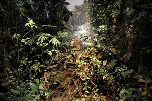 Ausschnitt aus Unterholz-Diorama