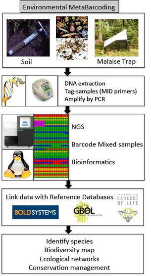 Environmental Barcoding using Next Generation Sequencing (NGS)