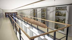 Sammlungsräume Herpetologie
