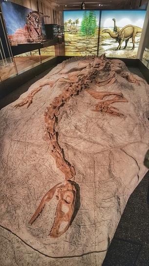 Exponat Dinoausstellung